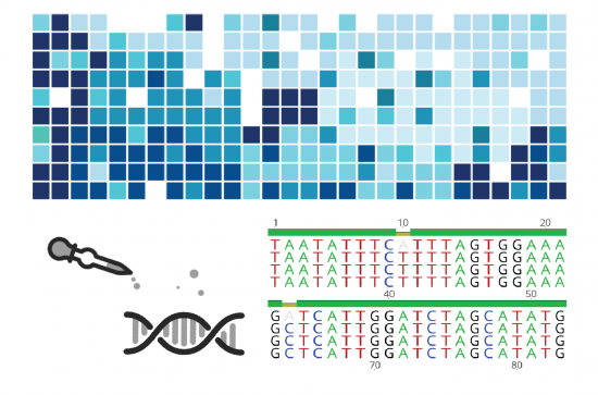 Genotypisierungspipeline asGBS